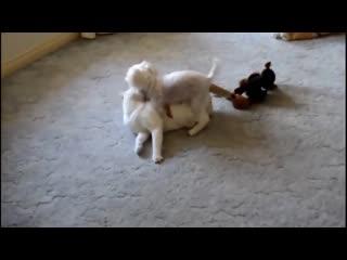 Самые смешные котята 2015. Смешное Видео про котов, кошек и котят 2015. Приколы с животными.mp4
