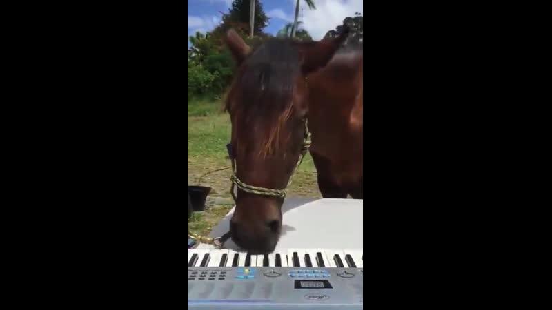 Лошадь играет на синтезаторе