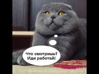Ты же не кот