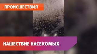 В Башкирии засняли на видео нашествие насекомых