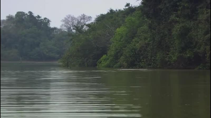 Амазонка Амазония реки солнца Документальный фильм