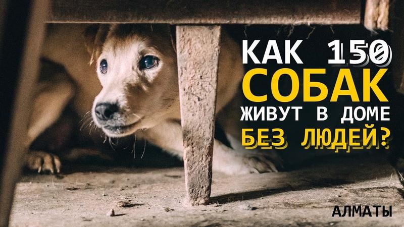 150 собак живут в частном доме без людей Быт псов в постапокалипсисе