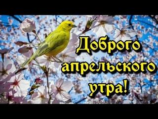 С Добрым Апрельским Утром! Просыпайся Мир Прекрасен! Улыбайся Миру!