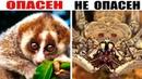 10 Животных с Самой Обманчивой Внешностью! Попробуй Угадать Кто Опасен, а Кто Нет..