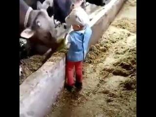 Малец красавчик, лопатой корове по голове