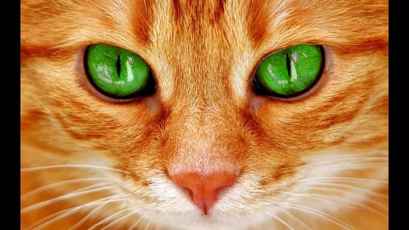 Игрушка антистресс Кошка