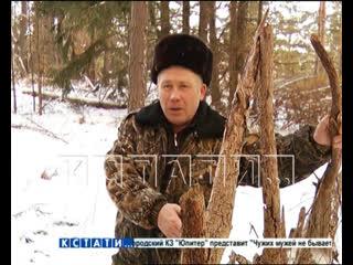 Жителю Гагино, который собрал не тот валежник в лесу, грозит 7 лет лишения свободы