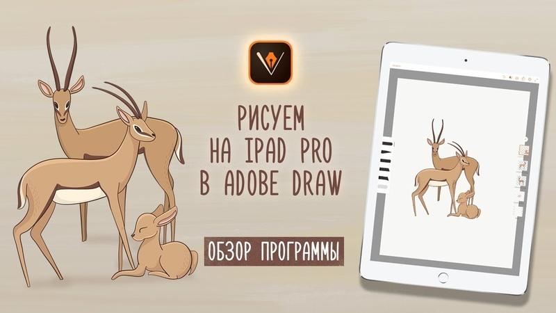 Рисую в векторе в Adobe Draw на iPad Pro с Apple Pencil. Обзор программы, мои этапы работы