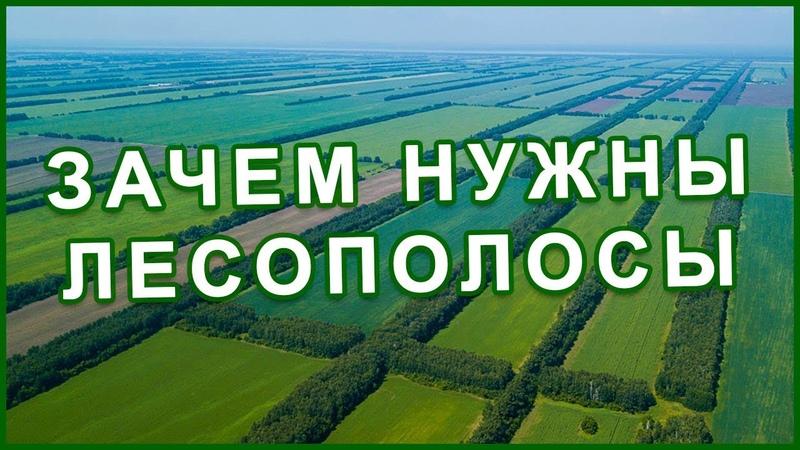 Здоровый ЛЕС главное богатство страны и народа Каменная степь Фролов Ю А