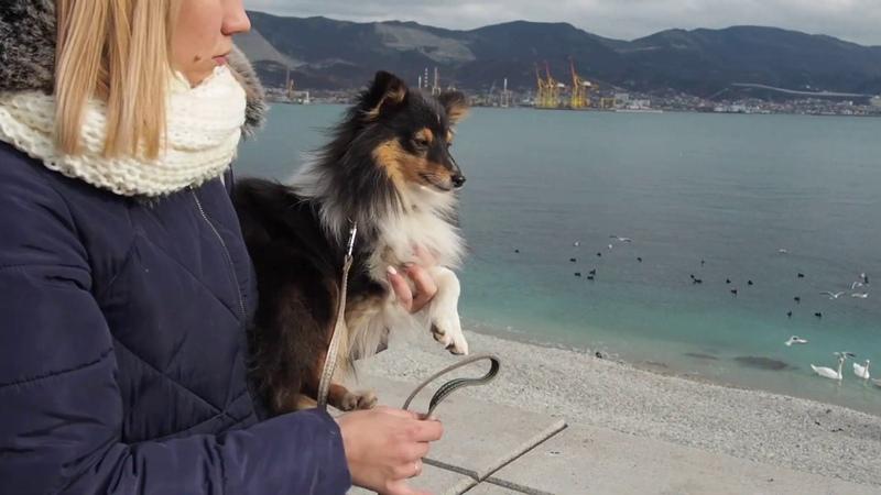 О чем думает ваша собака на прогулке Может она способна на большее