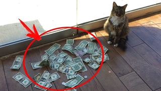 This cat brought his owner a lot of MONEY every day. The man installed a camera and was SHOCKED.