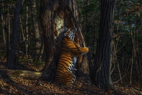 Россиянин Сергей Горшков завоевал гран-при конкурса Wildlife Photographer of the Year!
