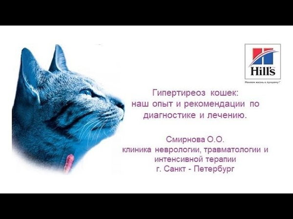 Вебинар на тему Гипертиреоз кошек Лектор Ольга Смирнова