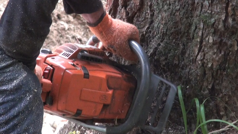 В КЧР черные лесорубы из Преградной напилили леса на 12 млн рублей
