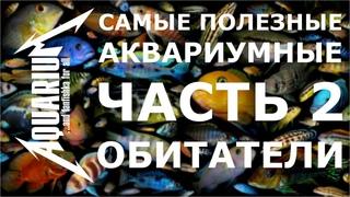 Самые полезные аквариумные обитатели: чистильщики, санитары, рыбки водорослееды. ЧАСТЬ 2.