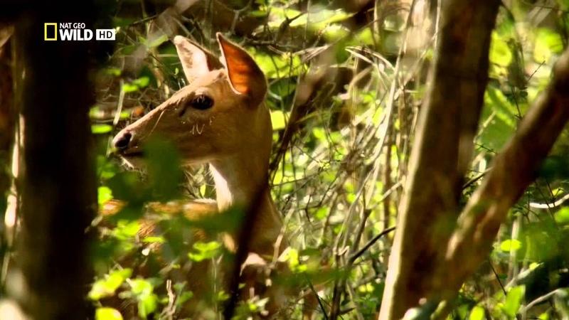Шри Ланка WILD National Geographic Видео