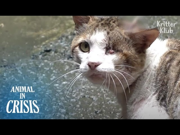 Why Would Humans Hammer A Nail On My Head Cat Bawls In Pain Part 1 Animal in Crisis EP193