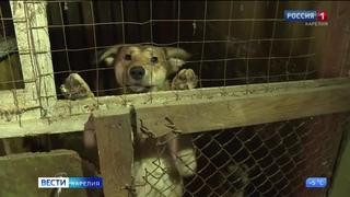 В Сегеже ситуация с бродячими собаками вызвала общественную дискуссию