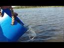 Запуск 250 кг осетра в VIP-акваторию в Рыболовной Усадьбе «ЗОЛОТЫЕ КАРАСИ» - 12 сентября 2020 год