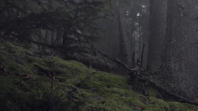 Dark forest · coub коуб