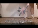 Марионетка мышка танцует Марионетки Купить Тут 89181157053