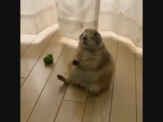 И завтрак съем сама, и обед не разделю ни с кем, и врагов у меня нет!