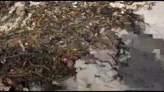 Обнародованы две возможные причины загрязнения Тихого океана на Камчатке