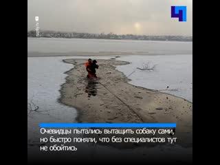 В Свердловской области спасли бездомную собаку, которая провалилась под лед