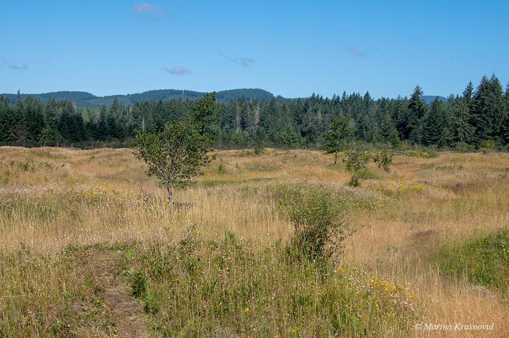 США, штат Вашингтон: Прогулка по Холмам Мима
