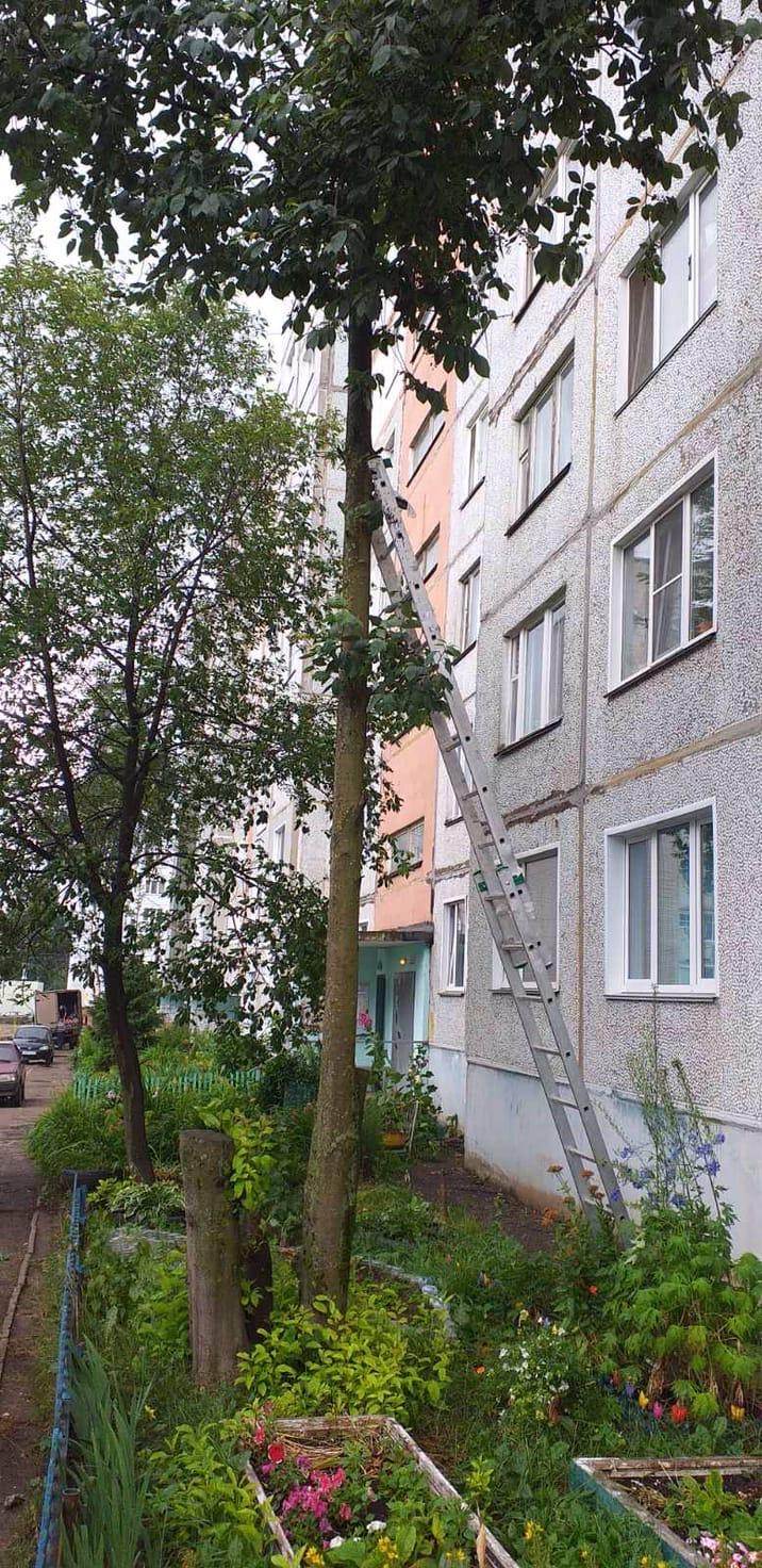 Проспект Строителей, 46. Спилена сухая ветка дерева