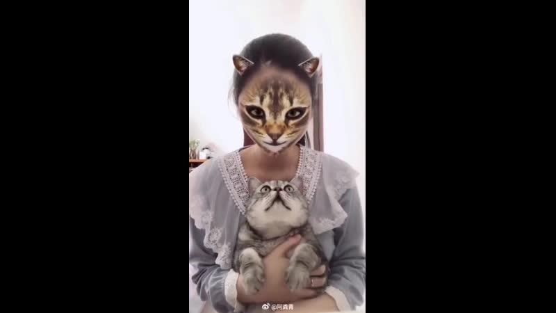 реакция последнего котика меня каждый раз заставляет смеяться до слез
