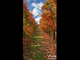 [Autumn in Australia The Fall Season Down Under Fall Foliage Fall Sayings]