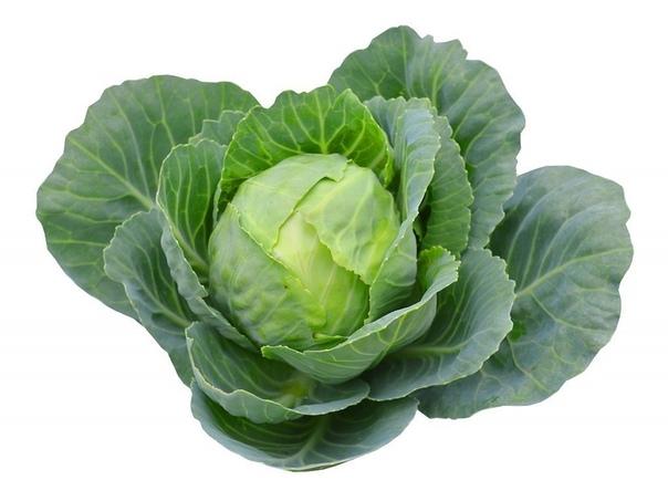 Как выбрать сорта капусты белокочанной