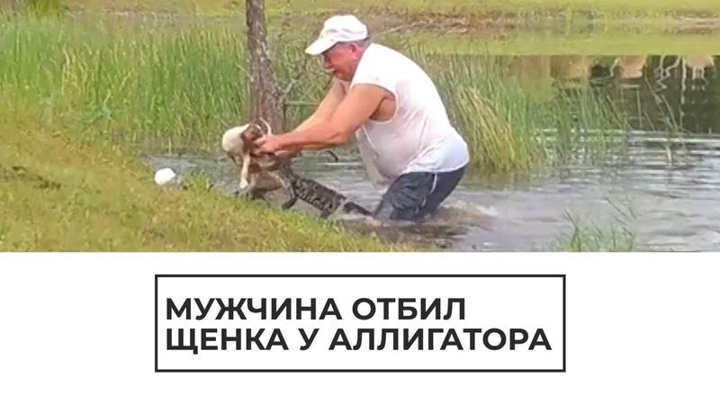 Мужчина отбил щенка у аллигатора