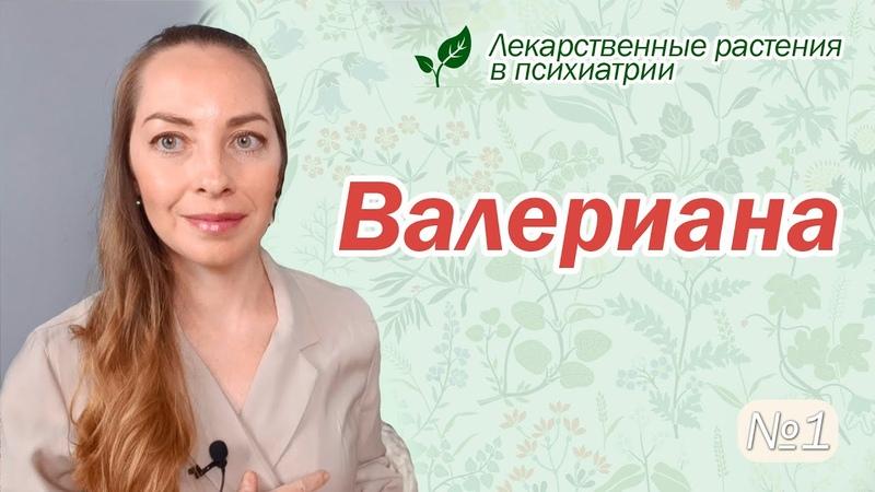 Валериана Лекарственные растения в психиатрии