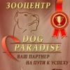 """Тренажёрный и хендлинг зал для собак """"DOG PARADI"""