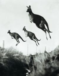 студия кенгуру донецк