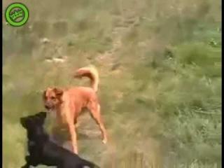 Techno Dog (Funny)