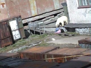 я слышал Уууу бля я вижу гнилые горажи и пьяную тёлку без штанов и...и. медведя!что за хуйня тут происходит