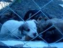 Вот такие замечательные малыши ждут своих хозяев...! 12/05/13г.