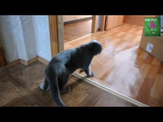 Пьяный кот пришёл домой) Прикол!