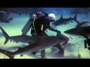 Scuba Diving With Over 40 Sharks in The Bahamas - Stuart Cove