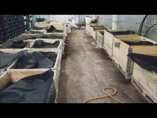 Обзор фермы для разведения червей Вермиферма под ключ Ферма для разведения червей под ключ
