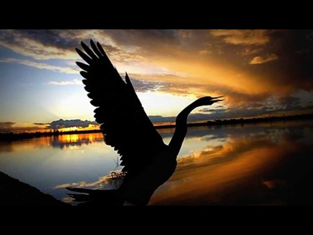 Раненая птица Дарина Кочанжи