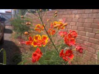 Lumia 1520 Denim 4k video