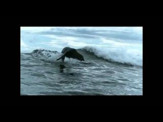 The Boss Hoss  - My Country [HD] * Rammstein - Mein Land - Single