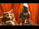 Папуги проти котів =