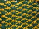 Ажурный двухцветный узор на вязальной машине Нева 2