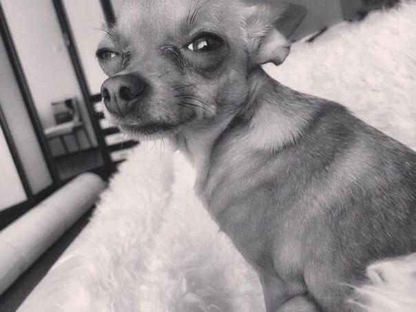 Картинка подозрительная собака