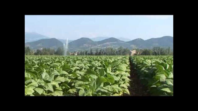 Tabacco a Nordest di Alberto Scapin e Emanuele Favaro Info
